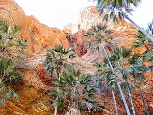Bungle Bungle Range - Palms in one of the many canyons.