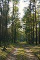 Puszcza Zielonka, okolice Trzaskowa.JPG