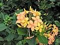 Queen Elizabeth Botanical Gardens 005.jpg