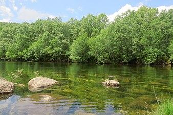 Río Tera a su salida del Lago de Sanabria.jpg