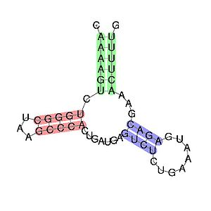 Hammerhead ribozyme - Predicted secondary structure and sequence conservation of Hammerhead ribozyme (type III)