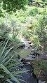 Rainbow Springs, Rotorua - panoramio (1).jpg