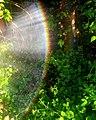Rainbow in a garden.jpg