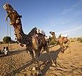 Rajasthan (6358502595).jpg
