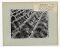 Range Soil Analysis - All States - DPLA - 3a6ab817e4a022a0d95458e2949dbfe2.jpg