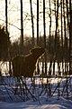 Red bull on the Snow.jpg