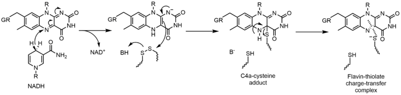 File:Reductive half-reaction of glutathione reductase.png