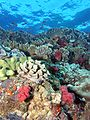Reef4436 - Flickr - NOAA Photo Library.jpg