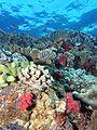 Reef4436 - Flickr - NOAA Photo Library.jpg
