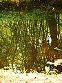 Reflection in Pond.JPG
