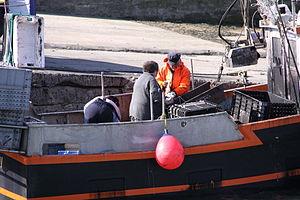 Retour de la pêche à la seiche du fileyeur Jason IV (42).JPG