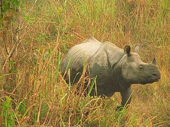 Rhino Race.jpg