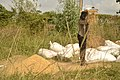 Rice processing in South East Nigeria7.jpg