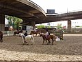 Riding lessons under Westway - geograph.org.uk - 788833.jpg