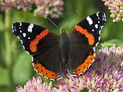 Ringve botaniske hage foto-åge hojem NTNU Vitenskapsmuseet DSC3075 (15264124156) cropped.jpg
