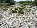 River Wharfe at Kilnsey 08.jpg