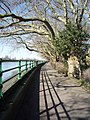 Riverside path in Bishops Park - geograph.org.uk - 1741604.jpg