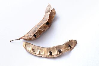 Robinia pseudoacacia - Robinia pseudoacacia seeds