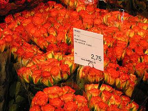 Roses-Ethiopia.jpg