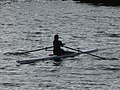 Rowing, Clippers Quay, Salford, May 2019 (01).jpg