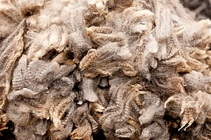 Beige - Beige is the French word for the color of natural wool. Freshly-sheared wool from the Royal Winter Fair.