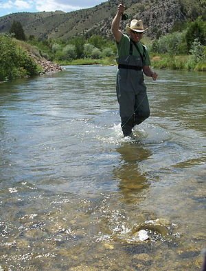 Ruby River - Fly Fisherman on the Ruby River