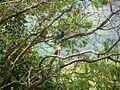 SAN BIRDS 31.jpg