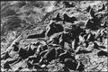 SEA LIONS ON A ROCKY SHORE - NARA - 520125.tif