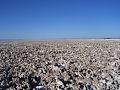Salar de Atacama, Region de Atacama, Chile.jpg