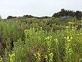 San Luis Obispo-Paso Robles, CA, CA, USA - panoramio - Sergei Gussev (9).jpg