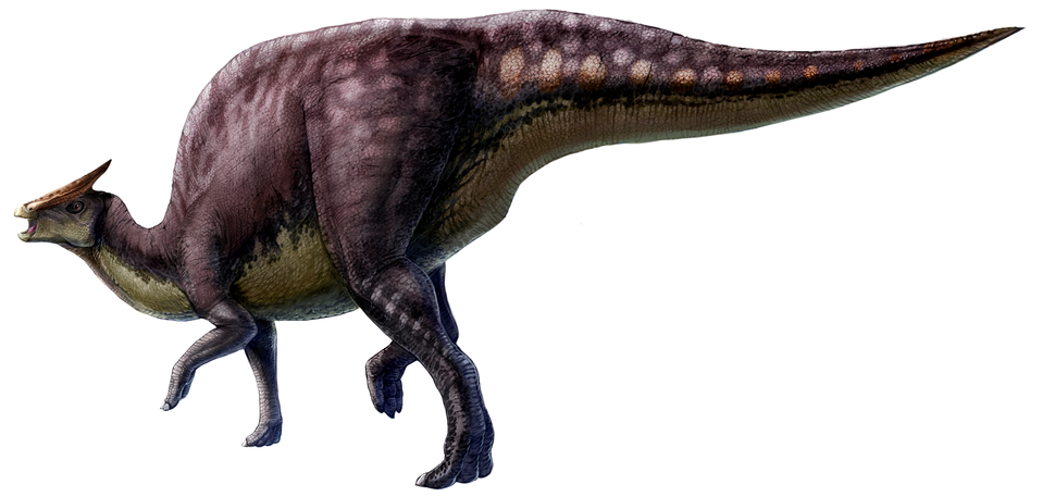 Saurolophus scalation