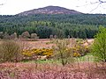 Screel Hill - geograph.org.uk - 1274035.jpg