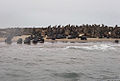 Seals (5288187393).jpg