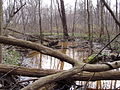 Seasonal pond P4100062.JPG