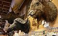 Seattle - Curiosity Shop trophy heads 02A.jpg