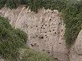 Sehwan Fort.jpg