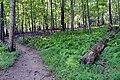 Seneca trail ferns 355 to watkins mill 20200904 100800 1.jpg