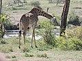 Serengeti 11 (14700396942).jpg