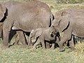 Serengeti 26 (14677643876).jpg