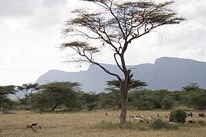 Shaba National Reserve - Image: Shaba reserve Kenya mountains