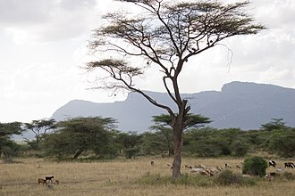 Shaba National Reserve - Image: Shaba reserve Kenya mountains