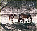 Shade Horses, Cherry Valley 3-23-13a (8595976968).jpg