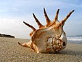 Shell on the Beach - Flickr - wildxplorer.jpg