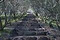 Shodoshima Olive Park Shodo Island Japan10n3.jpg