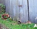 Shy kitten - geograph.org.uk - 435837.jpg