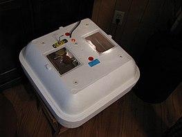 Инкубатор для искусственного разведения яйцекладущих животных