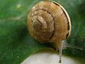 Snail 2862.JPG