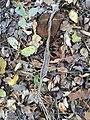 Snake Skin.jpg