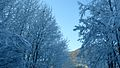 Snow and trees, Lake Como and Grandola Ed Uniti area.jpg
