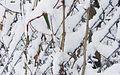 Snow on guard rail.jpg